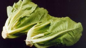 2 romaine lettuces pictured against a black background